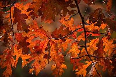 Its A Piece Of Cake - Autumn Oak by Steve Gadomski