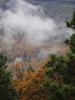 Photograph - Autumn Oaks by Jacqueline  DiAnne Wasson
