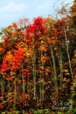 Photograph - Autumn On A Hill I - Blue Ridge Mountains by Dan Carmichael