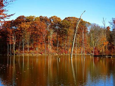 Photograph - Autumn On Alum Creek by Ron Grafe