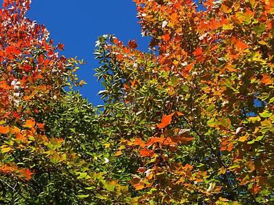 Photograph - Autumn On Blue by Gene Cyr