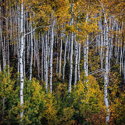 Art Print featuring the photograph Autumn On Mcclure Pass by Ken Smith