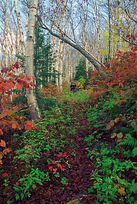 Autumn On Mount Hale Art Print
