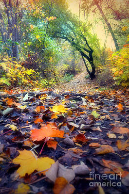 Photograph - Autumn On The Forest Floor by Tara Turner