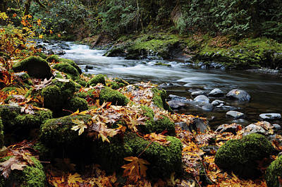 Salmon River Photograph - Autumn On The Salmon River, Welches by Michel Hersen