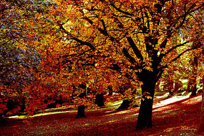 Print featuring the photograph Autumn On Wombat Hill II by Chris Armytage