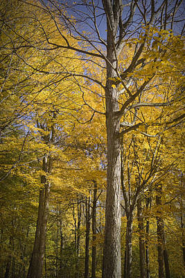 Hager Wall Art - Photograph - Autumn Orange Forest Colors At Hager Park No.1189 by Randall Nyhof