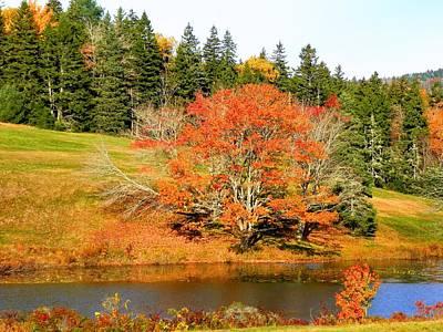 Photograph - Autumn Orange by Gene Cyr