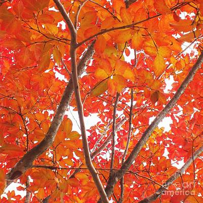 Autumn Orange Art Print by Scott Cameron
