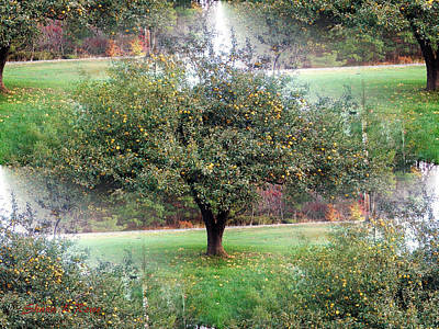Photograph - Autumn Orchard by Shana Rowe Jackson