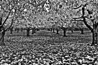 Autumn Orchard  Art Print