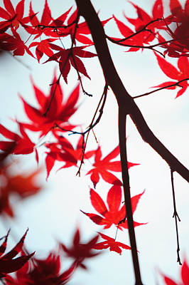 Photograph - Autumn Painting In Japanese Style by Jenny Rainbow