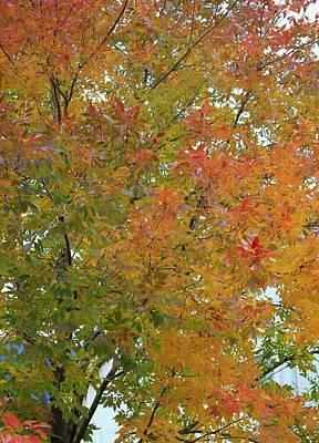 Photograph - Autumn Paints A Tree 3 by Diane Alexander