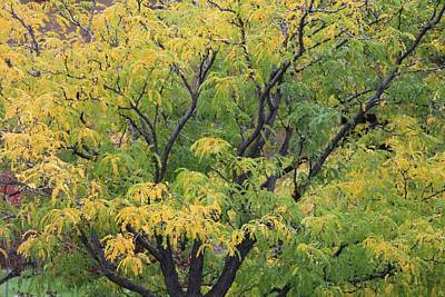 Photograph - Autumn Paints A Tree 4 by Diane Alexander