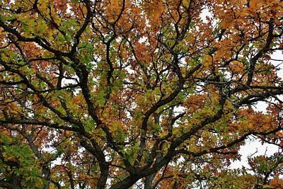 Photograph - Autumn Paints A Tree 5 by Diane Alexander
