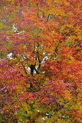 Photograph - Autumn Paints A Tree 6 by Diane Alexander