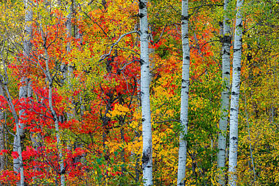 Duluth Photograph - Autumn Palette by Mary Amerman