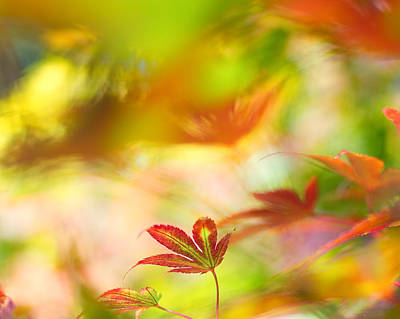 Photograph - Autumn Palette by Sarah-fiona  Helme