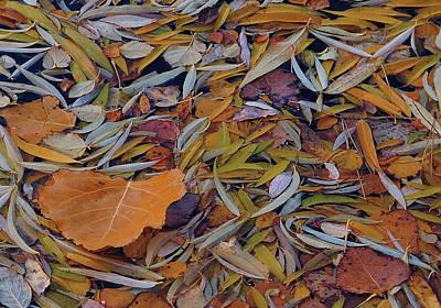 Autumn Palette Art Print by Steven Milner
