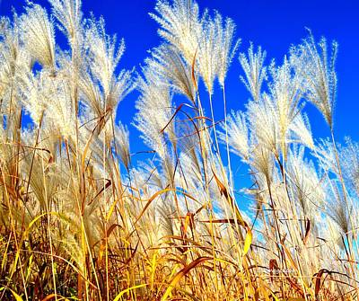 Photograph - Autumn Pampas by Susie Loechler