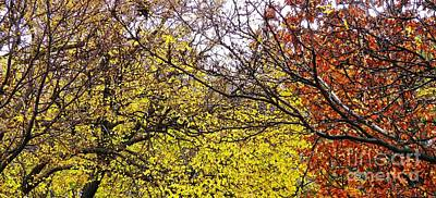 Photograph - Autumn Panorama by Sarah Loft
