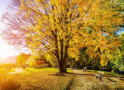 City Photograph - Autumn Park by JR Photography