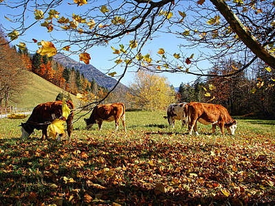 Photograph - Autumn Pastoral Scene In The Austrian Mountains by Menega Sabidussi