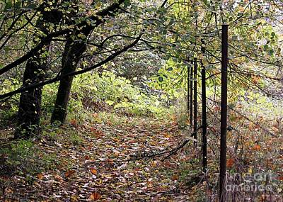 Photograph - Autumn Path by Erica Hanel