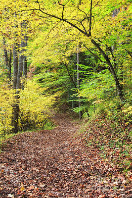 Photograph - Autumn Path In The Woods by Jill Lang
