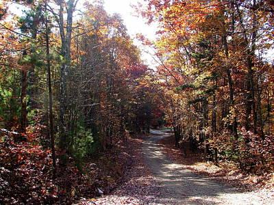 Photograph - Autumn Path by Lew Davis