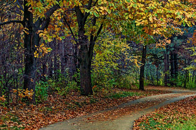 Photograph - Autumn Path by Nikolyn McDonald