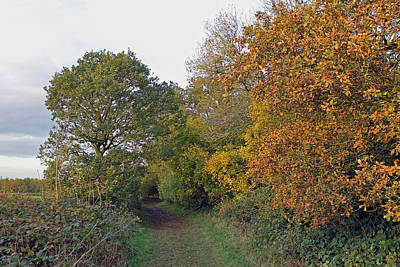 Katharine Hepburn - Autumn Path by Tony Murtagh