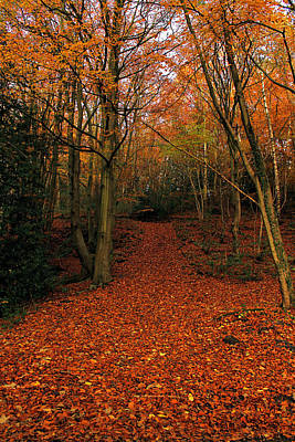 Photograph - Autumn Pathway by Sarah Broadmeadow-Thomas