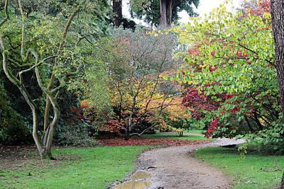 Photograph - Autumn Pathway by Tony Murtagh