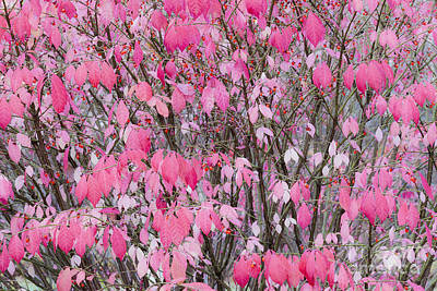 Photograph - Autumn Pink by Alan L Graham