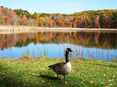 Autumn Pond Goose Art Print