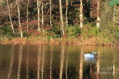 Reflection On Pond Photograph - Autumn Pond Sunset With Swan by Carol Groenen