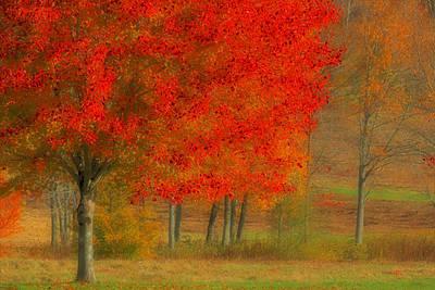 Autumn Popping Art Print