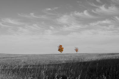 Photograph - Autumn Prairie Trees by Dylan Punke