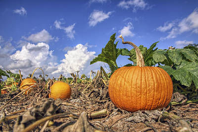Photograph - Autumn Pumpkin Patch - Fall - Halloween by Jason Politte