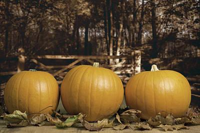 Rural Landscapes Photograph - Autumn Pumpkins by Amanda Elwell
