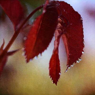 Photograph - Autumn Rain 2 by Fraida Gutovich