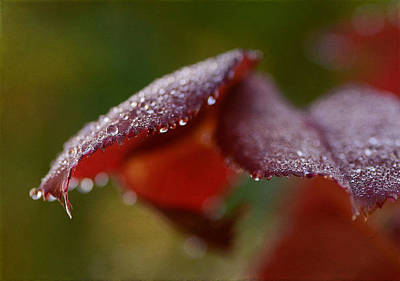 Photograph - Autumn Rain 3 by Fraida Gutovich