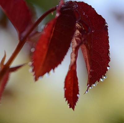 Photograph - Autumn Rain by Fraida Gutovich