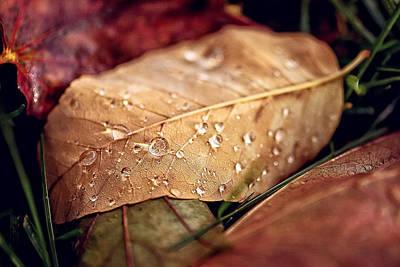 Modern Feathers Art - Autumn Rain by Lisa Charbonneau