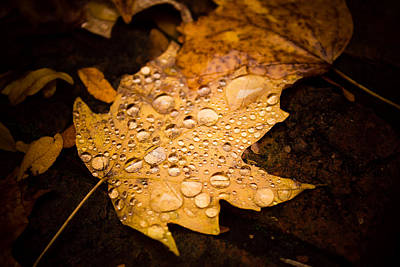 Photograph - Autumn Rain by Sara Frank