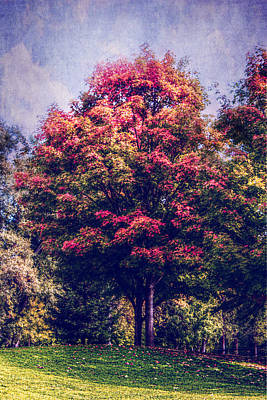 Photograph - Autumn Rainbow by Melanie Lankford Photography