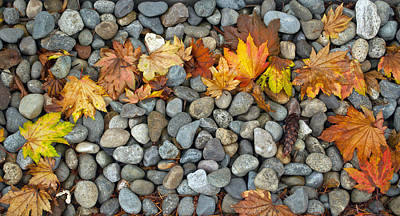Photograph - Autumn Rainbow by Tikvah's Hope