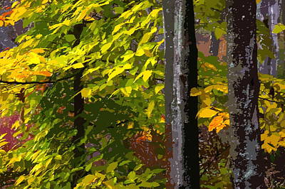 Art Print featuring the photograph Autumn  by Randy Pollard