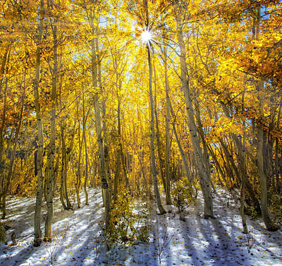 Autumn Rays Art Print